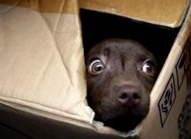 perro-miedo-petardos