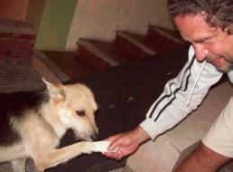 comosaludar a  un perro